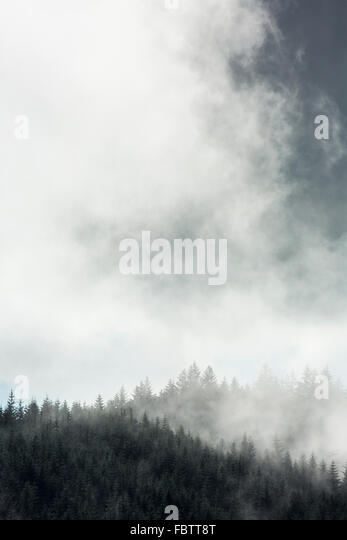 Atmospheric moody image of mist rising over tree valley on Ardnamurchan Peninsula, Highland, Scotland - Stock Image