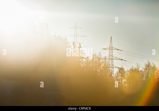 Telephone poles over trees - Stock-Bilder