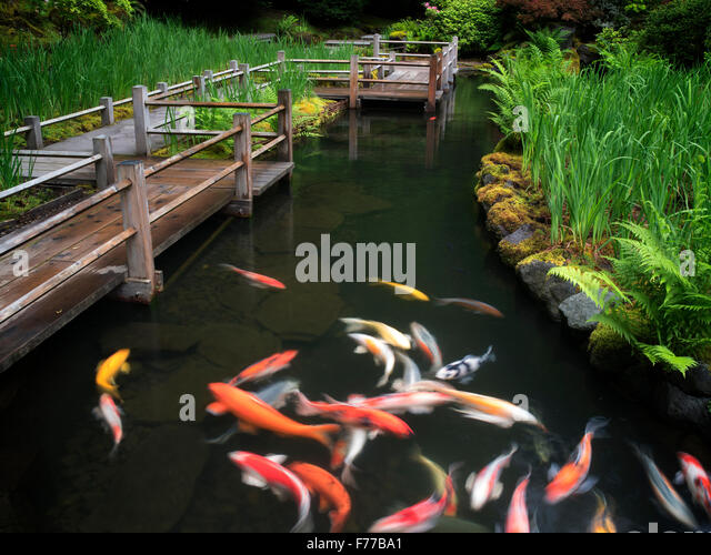Koi and iris beds path. Japanese Gardens, Oregon - Stock Image