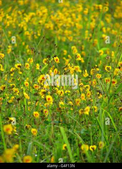 Yellow Tropical Flowers - Stock Image