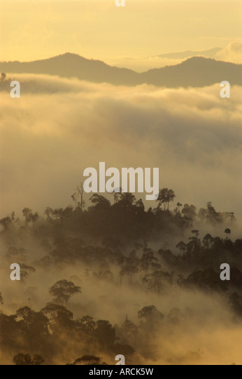 Dawn light silhouettes the trees of the rainforest, Danum Valley, Sabah, island of Borneo, Malaysia - Stock Image