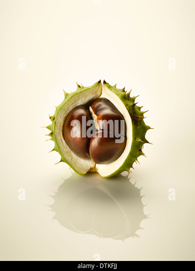 Close up of chestnut in shell - Stock Image
