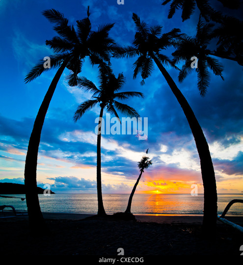 Silhouette of palm trees at sunset, Nippah Beach, Lombok, Indonesia, Southeast Asia, Asia - Stock Image