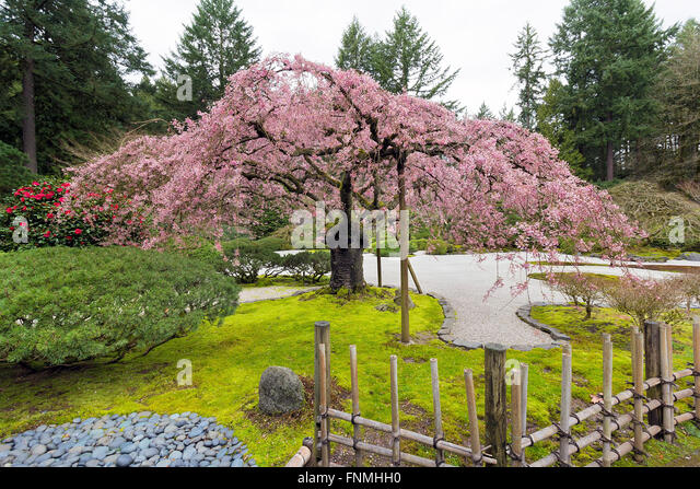 Bamboo fencing stock photos bamboo fencing stock images for Cherry blossom garden japan