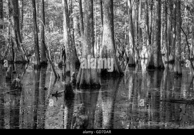 how to draw easy dense jungle and mangrove swamp