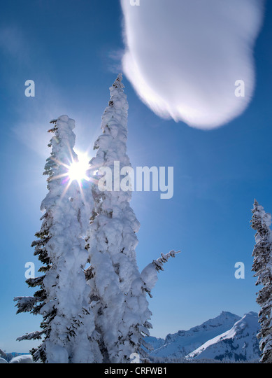 Snow covered trees with sunburst and cloud. Mt. Rainier National Park, Washington - Stock Image