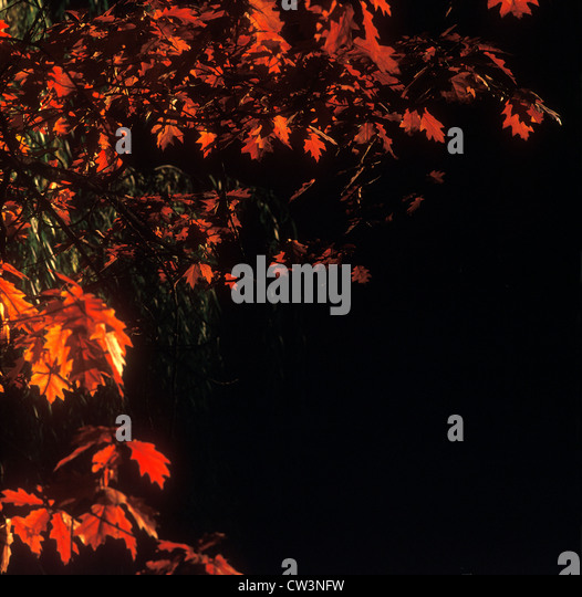 Autumn background. - Stock-Bilder