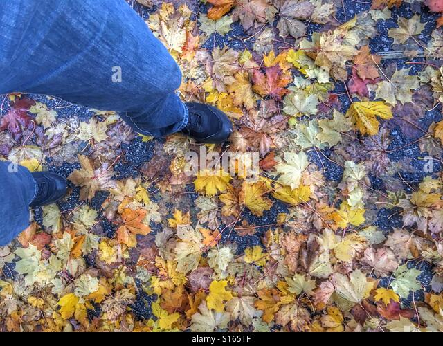 Walking on a bed of autumn leaves - Stock Image