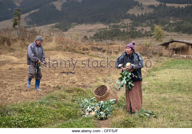 Turnip farmers, Bumthang Valley, Bhutan, Asia - Stock Image