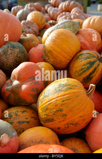 Fresh whole pumpkins and squash - Stock Image