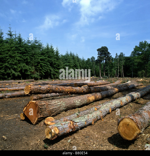 Felled trees in a forest - Stock Image