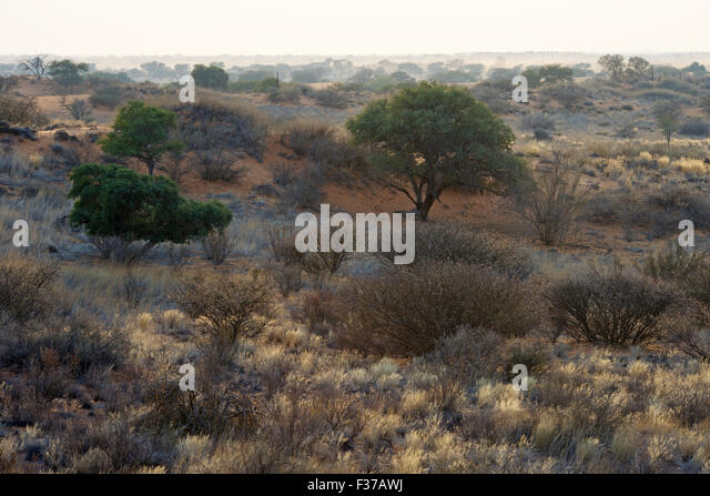 Sunrise in the Kalahari, Kalkrand, Namibia - Stock Image