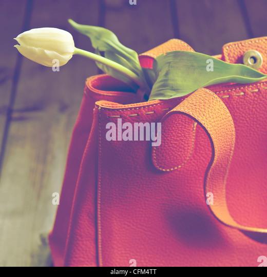 a tulip in a handbag - Stock Image