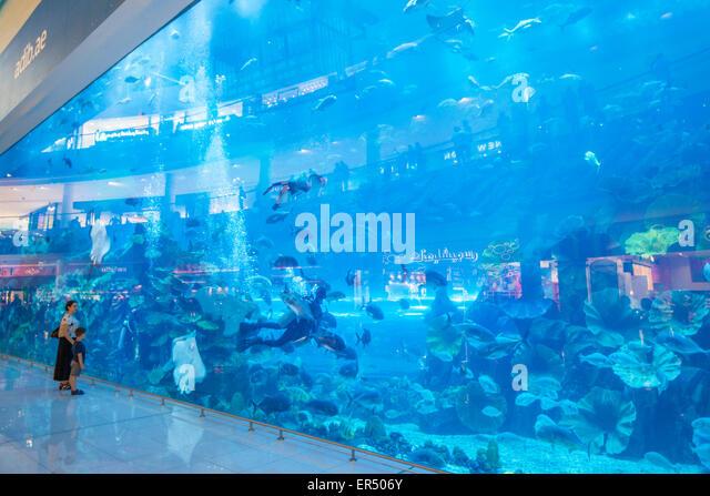 Dubai Aquarium, Dubai Mall, Dubai City, United Arab Emirates, UAE, Middle East - Stock-Bilder