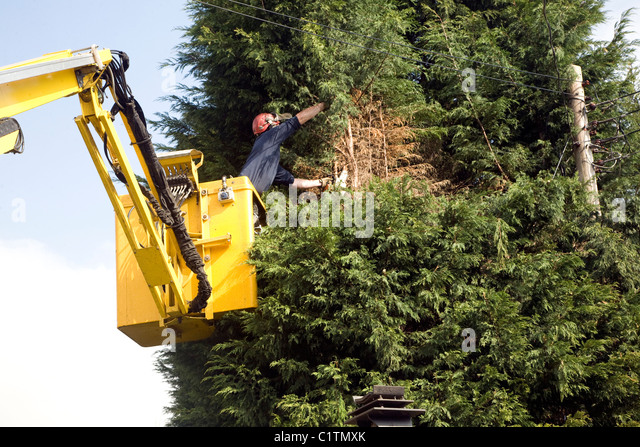 Cherry Picker Stock Photos Amp Cherry Picker Stock Images