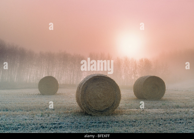 Hay bales at sunrise near Holland, Manitoba, Canada - Stock Image