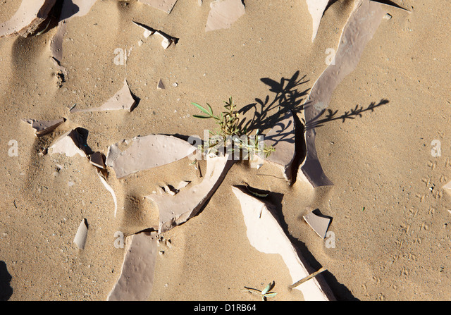 Morocco, M'Hamid, Dry earth and little plant. - Stock Image
