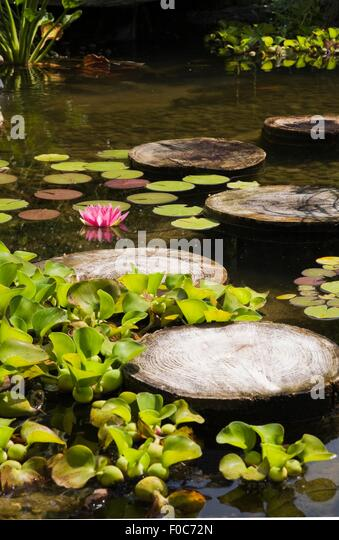 Garden Pond Water Stepping Stones Stock Photos Garden