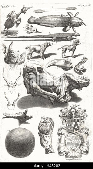 Table of illustrations of unusual natural history specimens - Stock Image