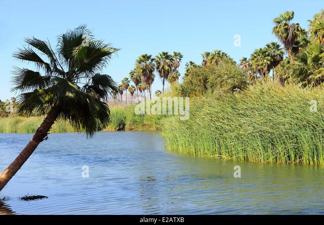 Mexico, Baja California Sur State, San Jose del Cabo, Estuary San Jose - Stock Image