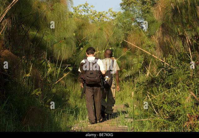 guided walk in Bigodi Wetland Sanctuary - Stock Image