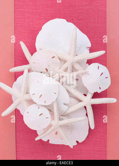 table centerpiece made of sand dollars and starfish - Stock Image