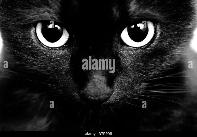 Black cat. Black eyes. Close up - Stock Image