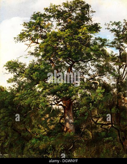Oak Tree - by Wolfgang-Adam Töpffer, 1800's - Stock-Bilder