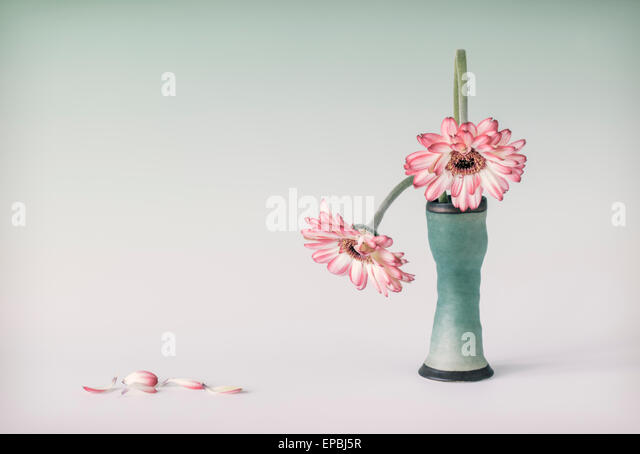 Two stooping Gerberas - Stock Image