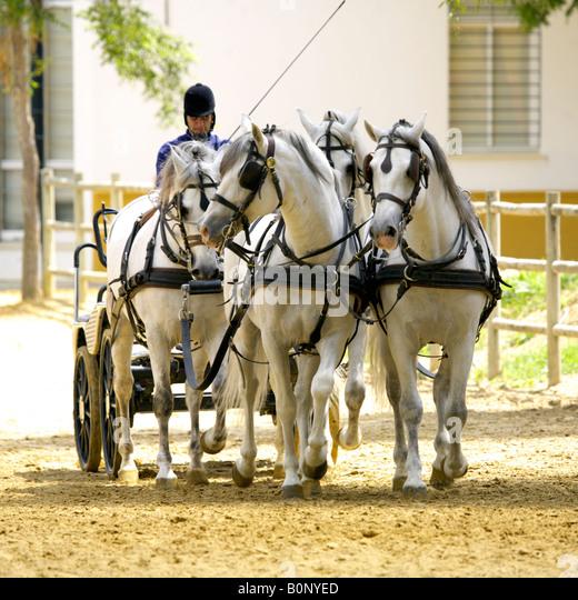 Horse drawn carriage at Yeguada de la Cartuja stud, Jerez, Andalucia, Spain - Stock Image