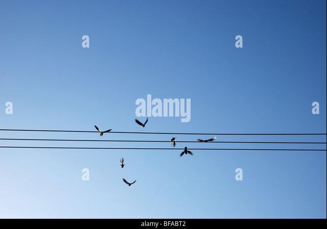 Birds flying off telephone lines - Stock-Bilder