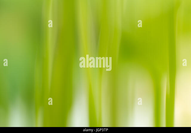 Abstract background of a zucchini plant with a vertical motion blur - Stock Image