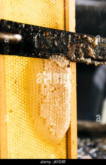 making honey, mel - Stock Image
