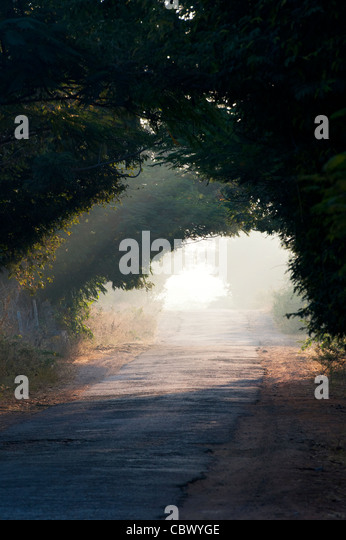Tunnel of trees in the Indian countryside. Andhra Pradesh, India - Stock Image