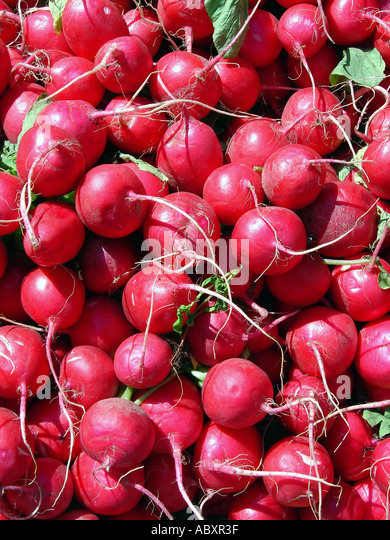 Still Life of Radishes - Stock Image