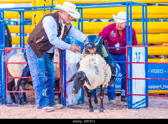 A boy riding on a sheep during a Mutton Busting contest at the Clark County Fair and Rodeo a Professional Rodeo - Stock Image