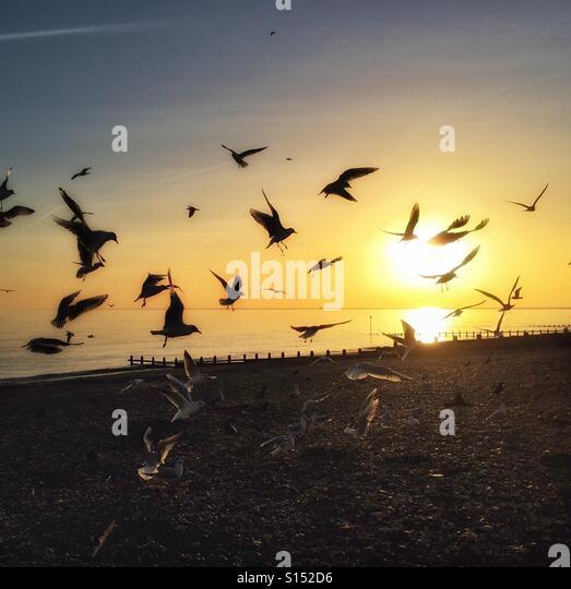 Gulls at sunset - Stock-Bilder