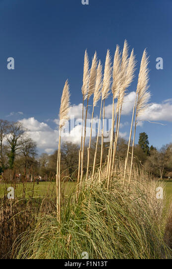 ferns in wind - Stock Image