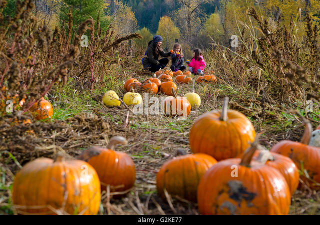 Mother daughters selecting pumpkins in pumpkin patch Green Croft Gardens in Grindrod in Shuswap region British Columbia - Stock Image