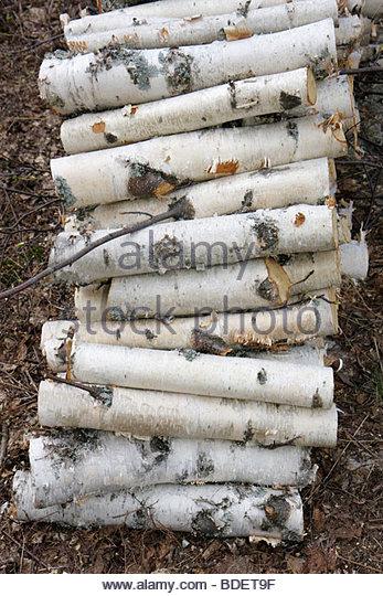 Michigan Upper Peninsula U.P. UP Lake Superior white birch logs stack wood firewood - Stock Image