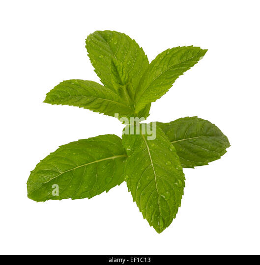 how to grow mint leaves