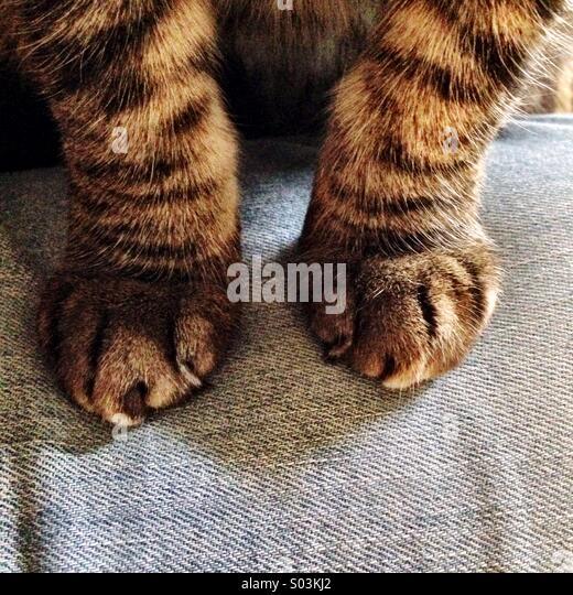 Cat paws - Stock-Bilder