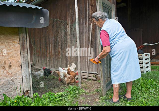 Chicken Farmer Stock Photos & Chicken Farmer Stock Images ...