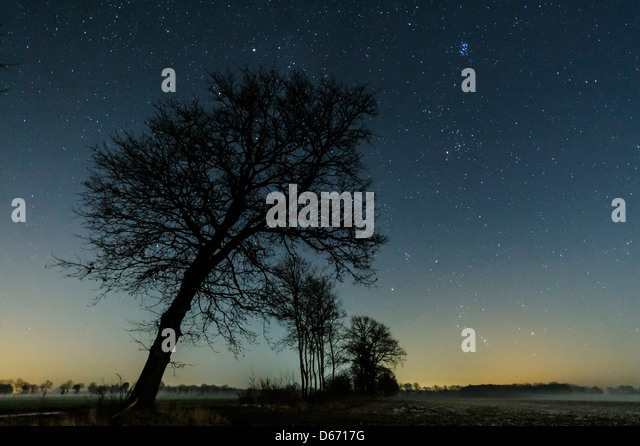starry sky with trees, niedersachsen, germany - Stock Image