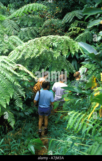 Dominica West Indies Caribbean Hiking the Rain Forest Giant Ferns - Stock Image