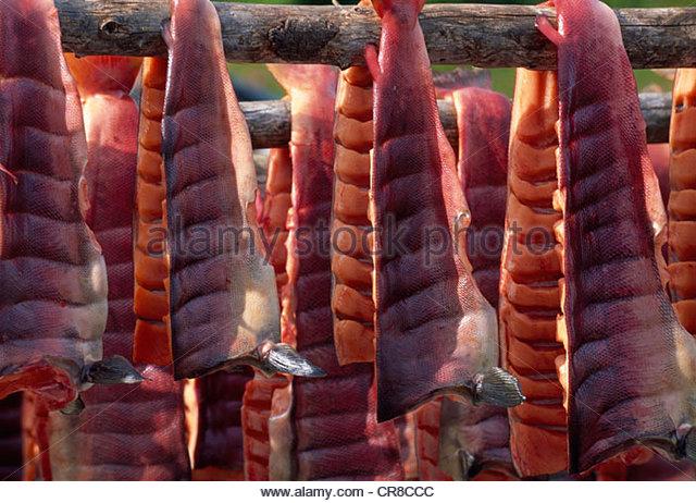 Sockeye salmon on a traditional drying rack, Hansen Creek, Alaska, USA - Stock Image