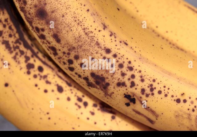 brown spots on overripe bananas - Stock Image