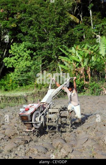 Boy plowing muddy rice paddy. Samosir Island, Lake Toba, North Sumatra, Indonesia, South-East Asia - Stock Image