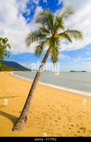 A palm tree on Kewarra Beach looking north along Clifton Beach to Palm Cove. Cairns, Queensland - Stock Image