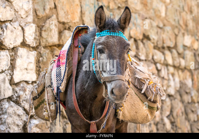 Portrait of a dunkey with bags in Iran - Stock Image